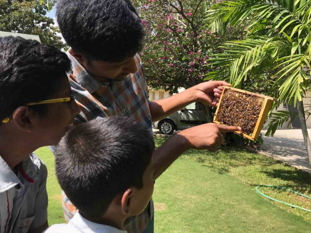 Students observing the construction of Honey comb